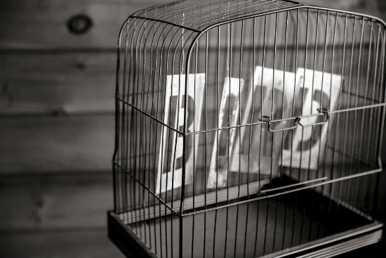 cage-bird-black-white.jpg